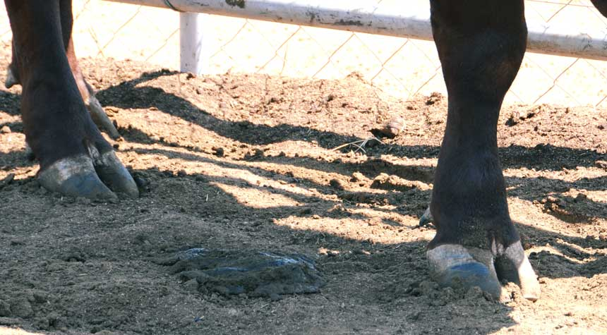 2-coloured hooves may indicate a nutritional deficiency disease