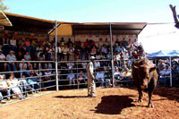 Bull in auction ring up for sale.