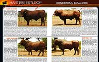 The 4 bulls and descriptions