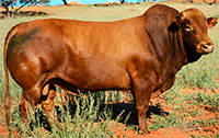 LOT 27: JMP 13-0069 (POENA / POLLED)