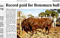 The Namibian: Record paid for Namibian Bull